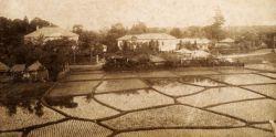 早稲田の田圃