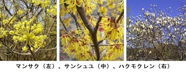 3種の植物