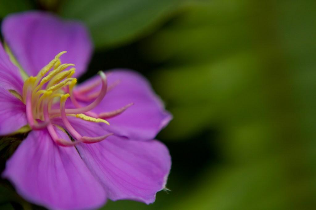 Purple_Flower_1600x1067