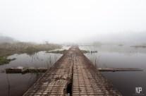 Walking the Line in the Alaka'i Swamp