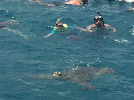 Snorkeling with Turtles in Waikiki