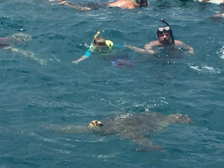 Snorkeling with Turtles in Waikiki