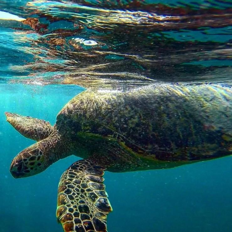 Turtle canyon in Waikiki