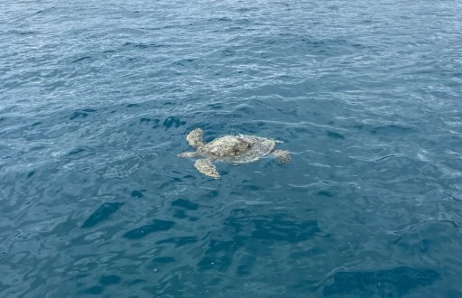 How To Snorkel In Waikiki Hawaii