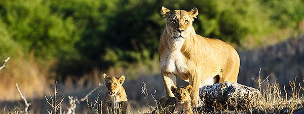 Vortrag Die Tiere Afrikas