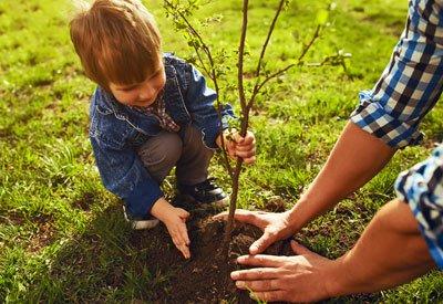 planting-fruit-trees