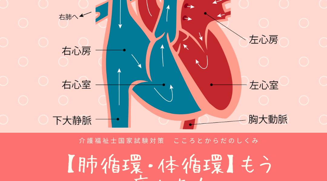 肺循環と体循環