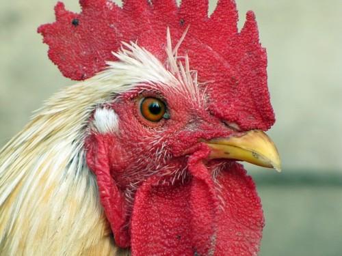もしかして鳥インフルエンザ?