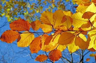 ロシアの四季、黄金の秋