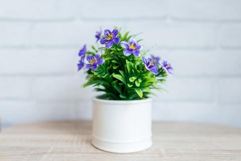 flower-3359072_1280