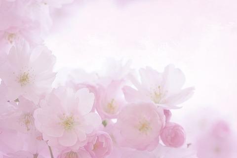pink-2160666_640