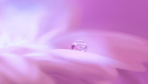 blossom-3054803_640