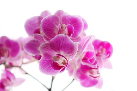 orchid-2264019_640