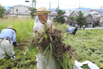 草刈作業_03_50%