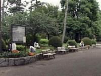 公園の除草