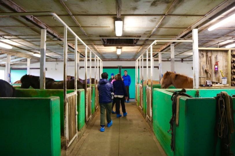 Gauksmyri Icelandic horse ranch