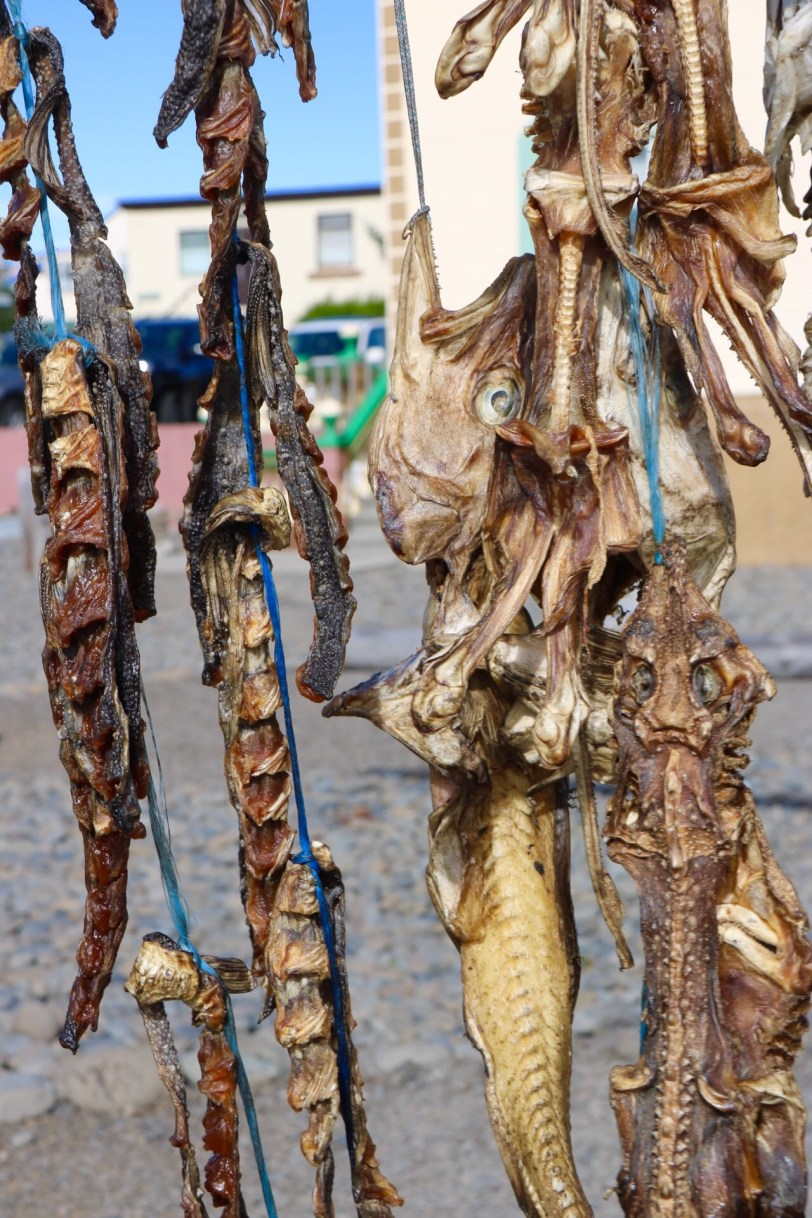 Wind dried fish Iceland