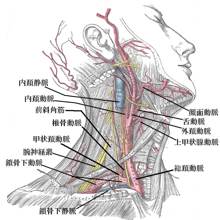 産後 下 腹部 痛 排卵痛の症状・原因・治療法排卵期の下腹部の痛み