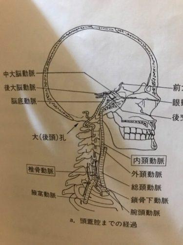 頚椎のズレから頭痛が起こるメカニズム