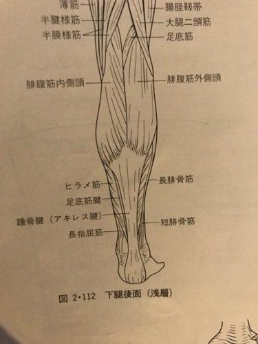 ふくらはぎ〜アキレス腱までの痛みの原因について
