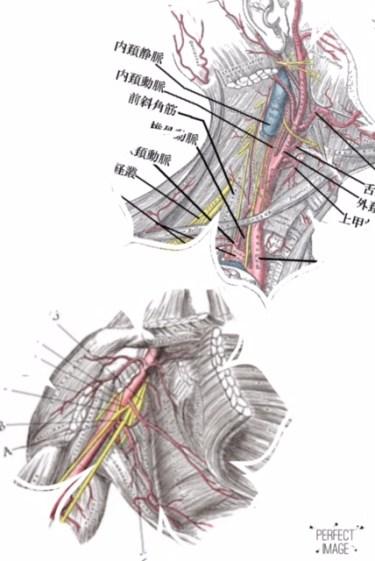 頚椎のズレから右肩〜右腕に痛みとしびれが出ていた患者さんの1症例