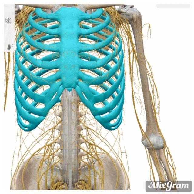 胸郭出口症候群とは?【病院と整骨院での見解について】
