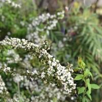 快眠館ガーデンにも花が咲き始めたよ!