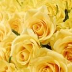 父の日の花は何を贈るのが正解?理由や由来、黄色いなら何でもいいの?
