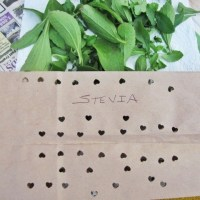 A Bit on HERBS and Drying Them the Easy Schmeezy Way