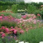 Flowering Favorites