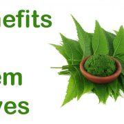 नीम के फायदे neem tree information in hindi