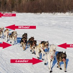 Iditarod Dog Sled Diagram Euglena Cell With Labels Mushing 101 – Kaiser Racing Kennel Bethel, Alaska
