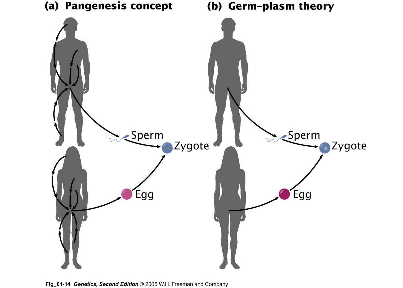Gregor Mendel and the discovery of genetics « KaiserScience