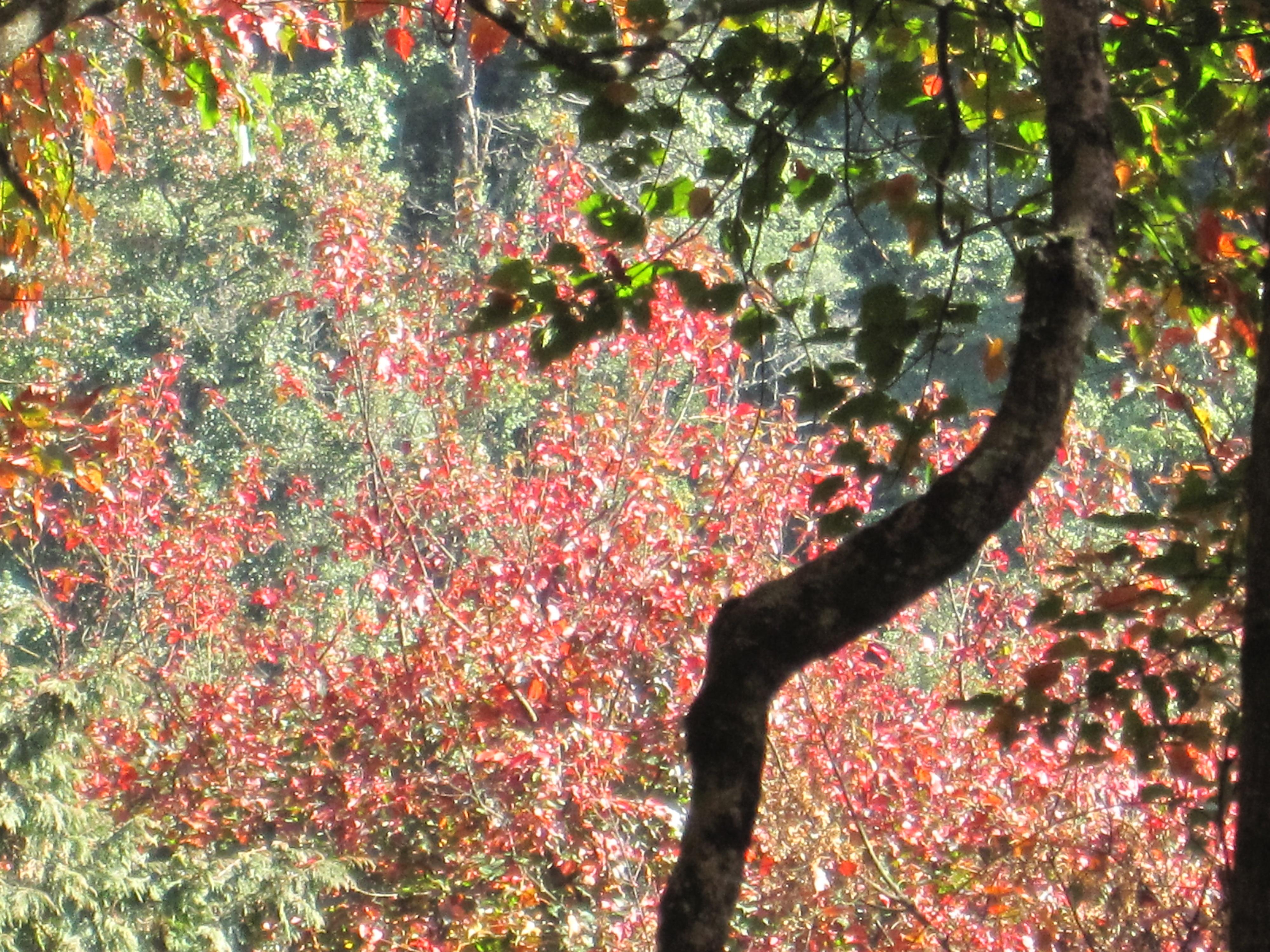 20101209生日/大雪山森林稍來楓葉   Is凱 的異想視界