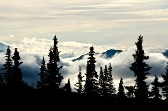 Fog burns off early in the day at Denali National Park.