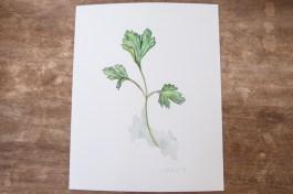 parsley-1