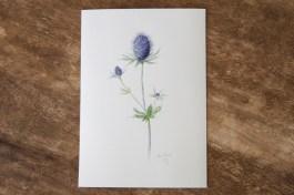 wildflower-thistle-1