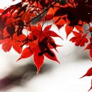 奈良公園 紅葉 2017
