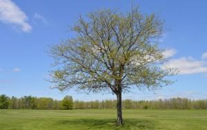tree-932229_640
