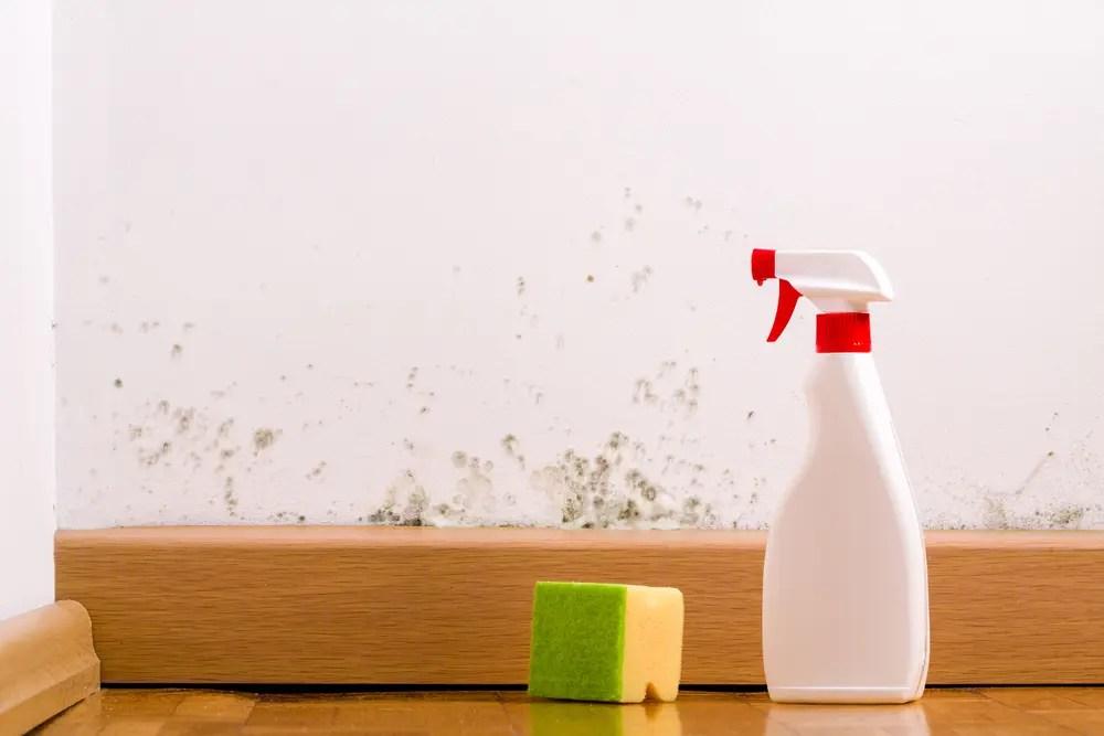 洗剤で部屋の壁のカビ掃除をする画像