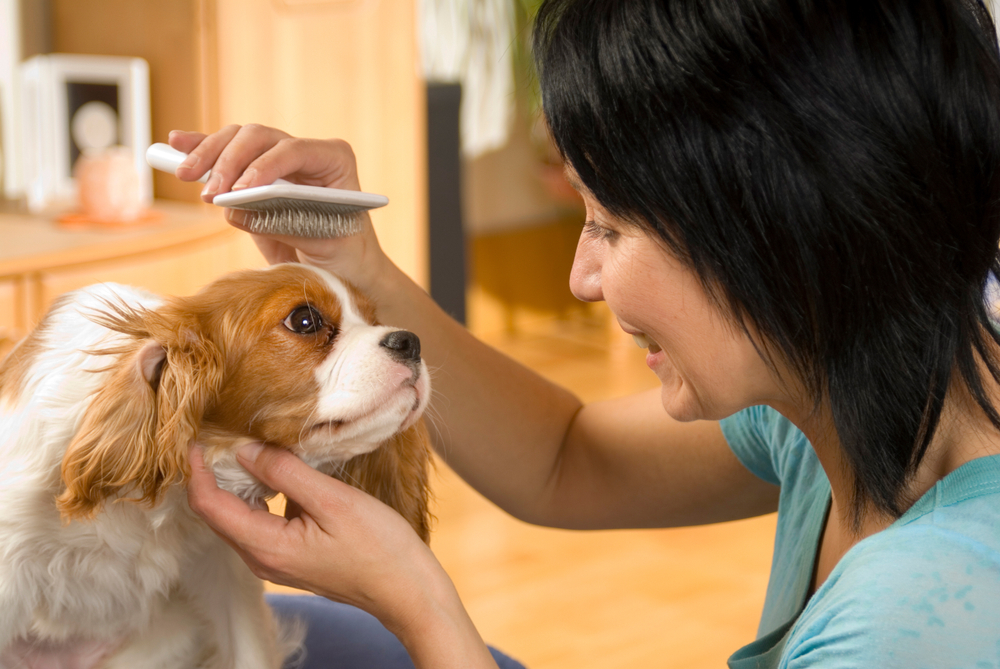 犬の毛をブラッシングする女性