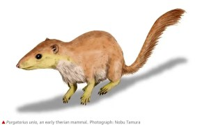 early mammal like squirrel with long nose and tail