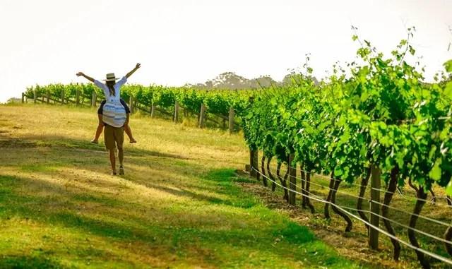 wine drinking australia