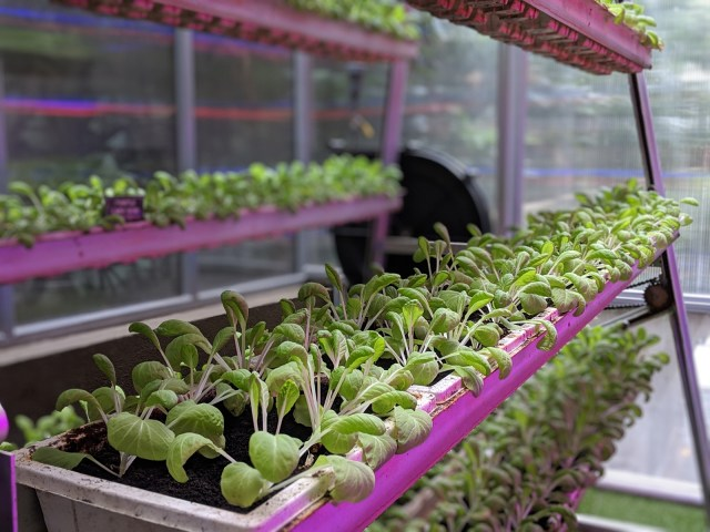 Hilton Singapore Vertical Garden Eco Green Travel Food