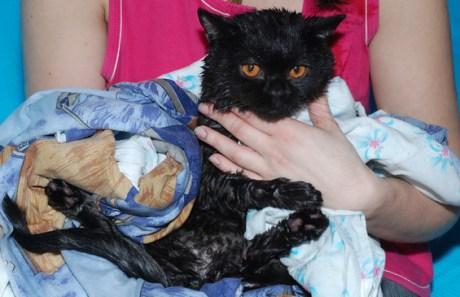 Как правильно мыть кота видео?