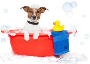 Как правильно купать собаку?