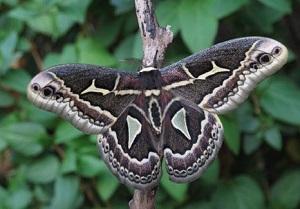 Что означают бабочки по фен шуй