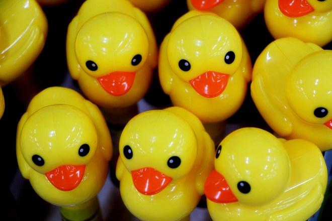 duck-1437312_1920