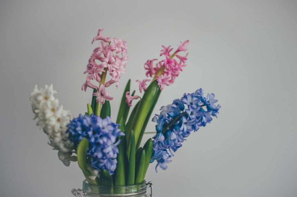 Зюмбюл - как да засадим пролетни луковици за цветя