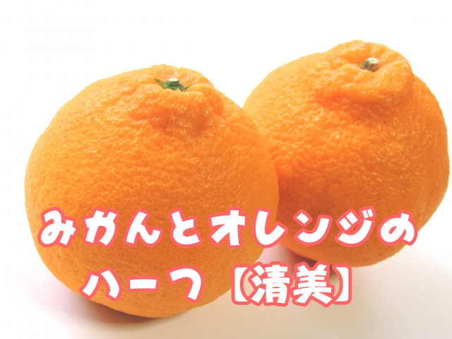 みかんとオレンジのハーフ清美